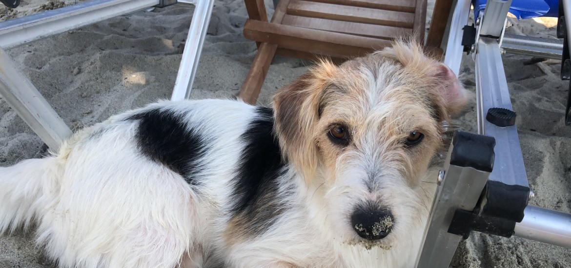 Rescuing a dog in Greece - The Rogue Consultant