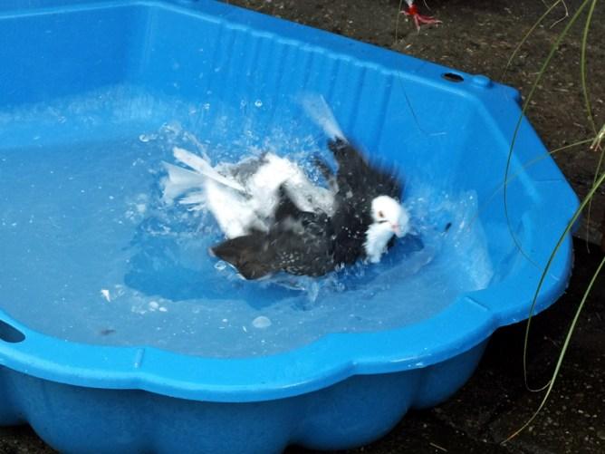 Birmingham Roller bathing