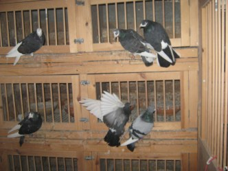 Here's some of John's breeding boxes