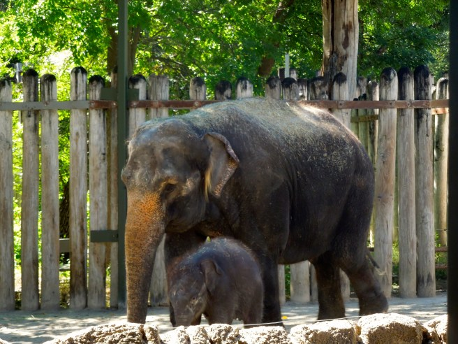 Fort Worth Zoo Elephant | The Rose Table