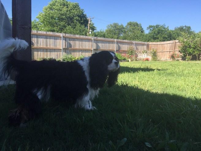 Gabby enjoying her backyard