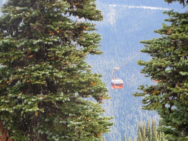 Whistler Peak to Peak | The Rose Table
