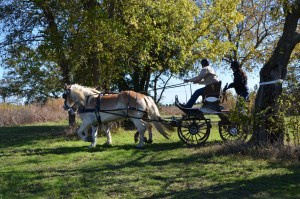 Black Star Sport Horses Carriage Event | The Rose Table