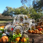 Pumpkin Village at Dallas Arboretum | The Rose Table