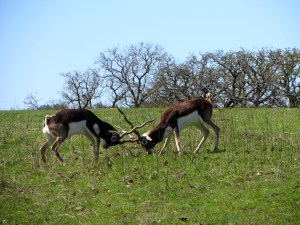 Fossil Rim Wildlife Center Review | The Rose Table