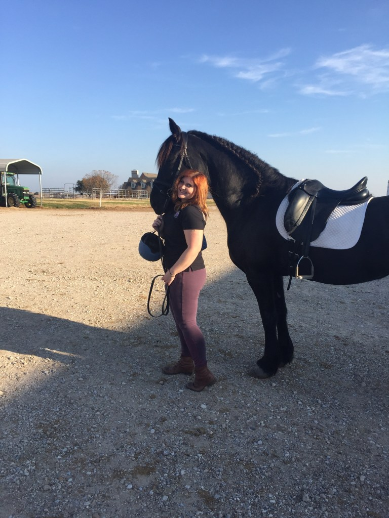 Black Star Sport Horses Review | The Rose Table