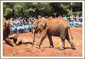 David Sheldrick Christmas Fostering