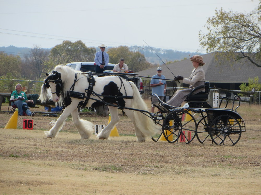 Black Star Sport Horses Carriage Event