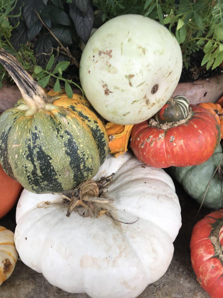 Dallas Arboretum Pumpkin Village | The Rose Table