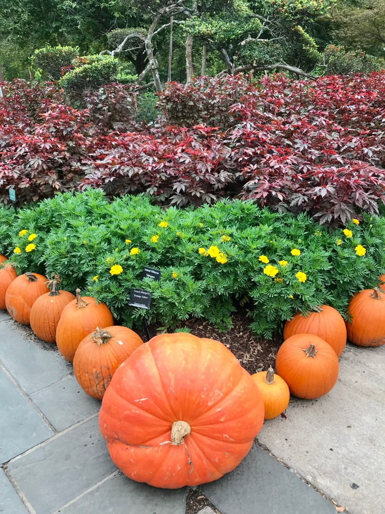 Dallas Arboretum Pumpkin Village | The Rose Table