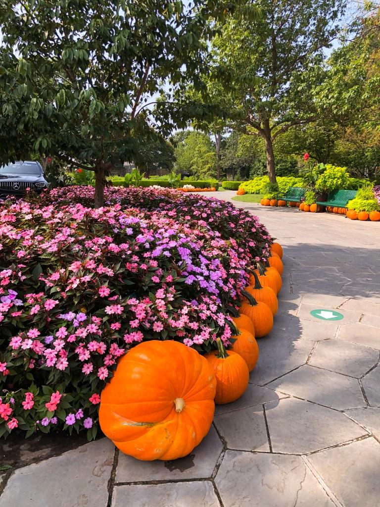 Dallas Arboretum Pumpkin Village Art of the Pumpkin 2020