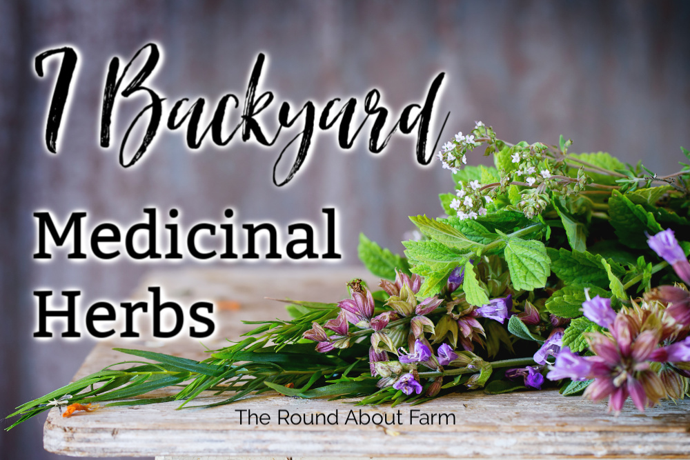 7 Backyard Medicinal Herbs
