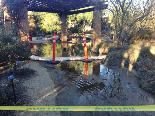 An irrigation valve ruptured and flooded the Botanical Garden before the spring 2016 semester started on Monday, Feb. 8, 2016. Woodland Hills, Calif. Photo: Samantha Bravo