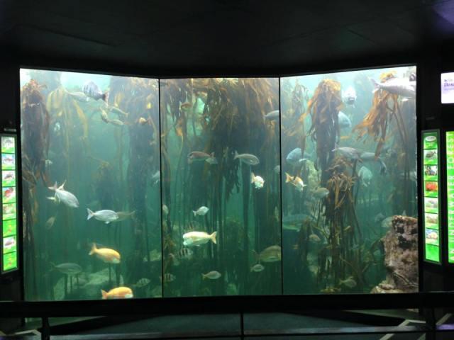 Diving Two Oceans Aquarium