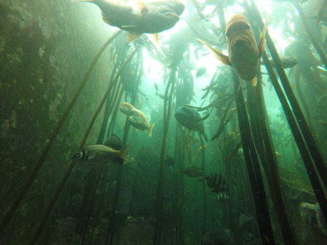 Inside the Kelp Forest Exhibit