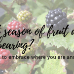 How to Embrace Your Season of Fruitfulness