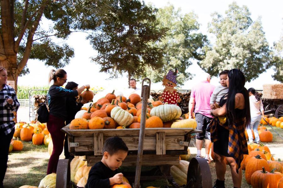 Families gather around a cart full of pumpkins at Banducci's Family Pumpkin Patch. Thursday, October 7, 2021.