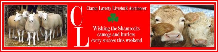 Ciaran Laverty advert copy2