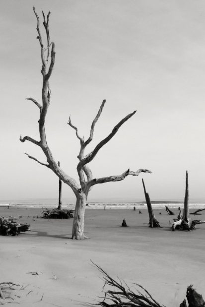 "In the ""Boneyard."" Bulls Island, South Carolina"