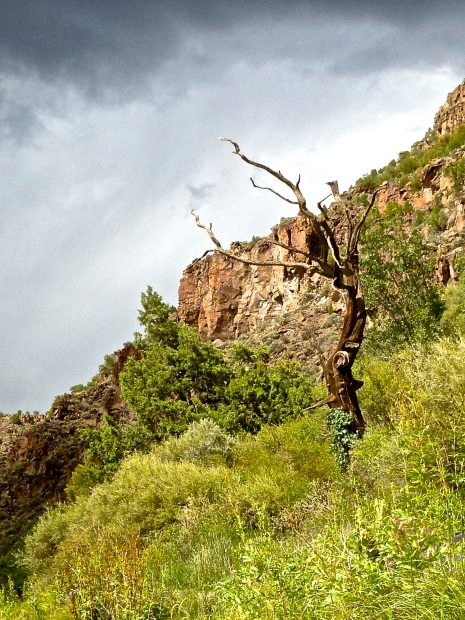 Twisted Juniper trunk in the Rio Grande Gorge.