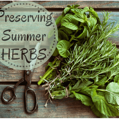 Tips for Preserving Summer Herbs