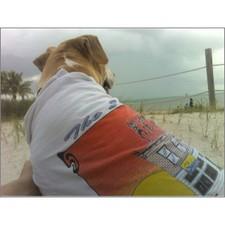 Marley_on_the_beach