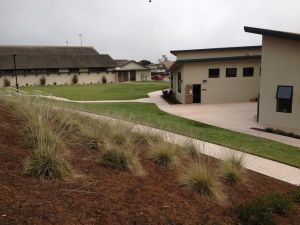 Drought-resistant plants, such as these bordering the CHS amphitheater, are one way to combat the rain shortage.