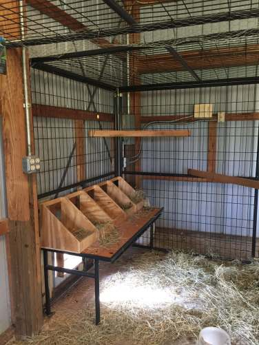 Chicken coup nesting boxes