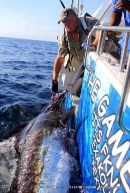 400lb Blue Marlin released in mid winter...