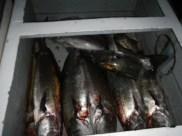 Fish braai!