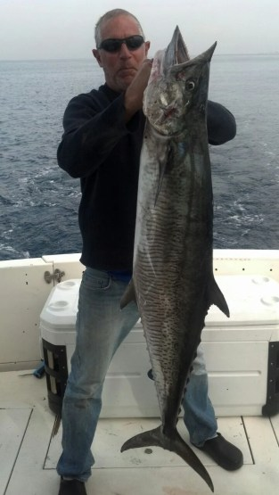 Scomberomerous Commersoni - 'couta, king mackeral, tanguiguie, spanish, narrow barred...but this one was caught in the Med!