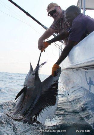 Healthy sailfish about to swim free at Vilankulos