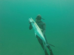 Spearfishing Vilankulos will get you plenty of king makerel attention