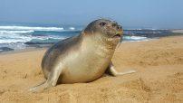 Elephant Seal by Jay Steenkamp