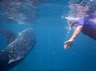 Bazaruto Archipilego Snorkeling