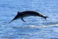 Big fish Bazaruto (c) FishBazsruto.com