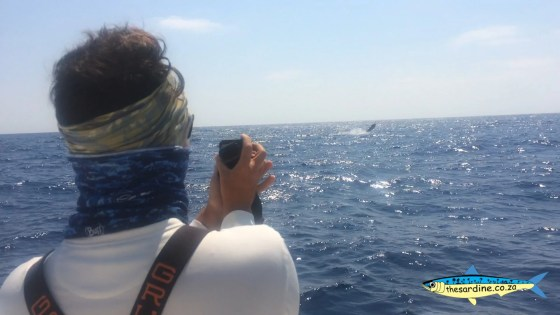 Dr. Mario Lebrato on camera duty as another black marlin throws the bait