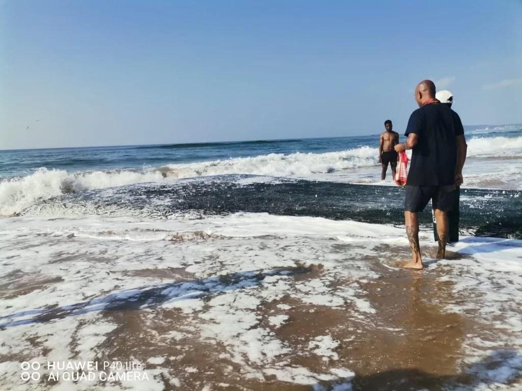 Sardine Sightings 2021: Suncoast at lunchtime