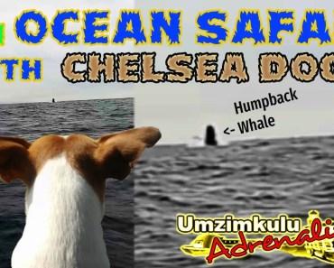 On Ocean Safari with Umzimkulu Adrenalin and Chelsea Dog