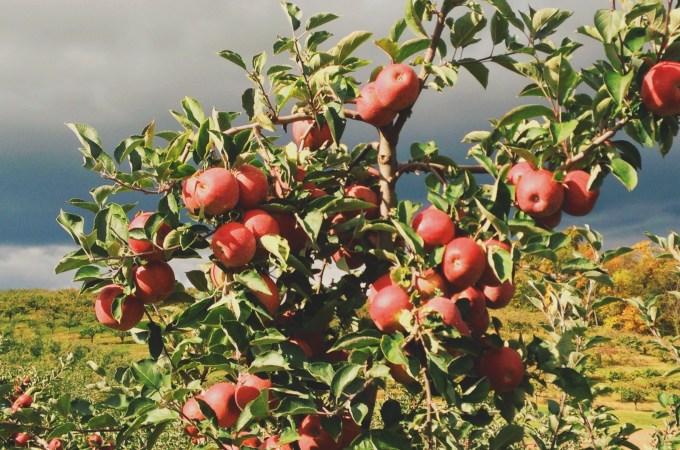 Cinna-Vanilla Applesauce