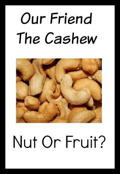Is The Cashew A Nut Or Fruit?