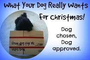 DIY Homemade Dog Toys For Christmas – Woof!