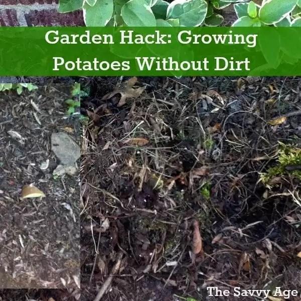 Garden Hack: Growing Potatoes Without Dirt!