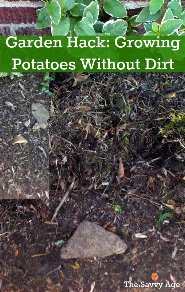 garden hack growing potatoes with mulch