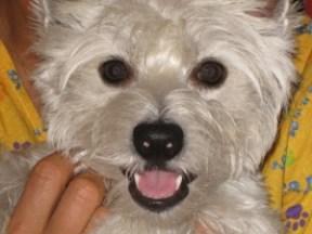 smilingBuddy