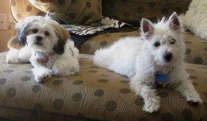 Pups on Couch