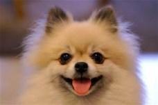 smilingdog2