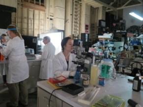 lab-work