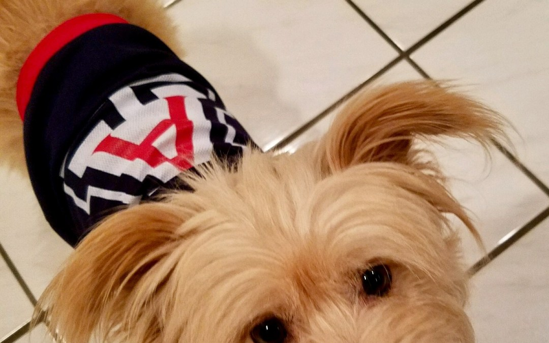Savvy Pets, 11/15/19:  Hello Scout!  And why you should look at cute animals online!