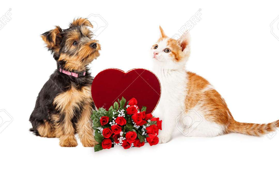 Savvy Pets, 2/12/21:  Valentine's Day with The Dogs of 2020